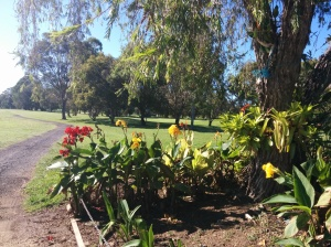 Cannas in the garden leading to the 10th hole.