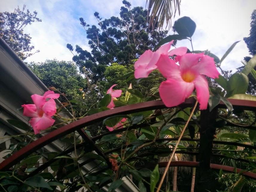 pink finally open