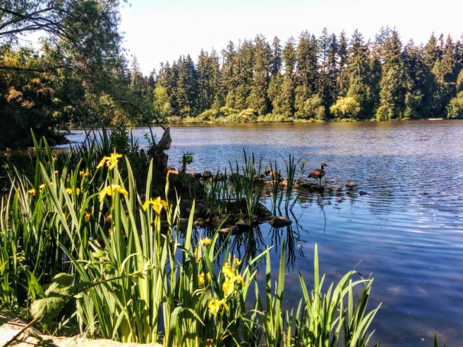 lost lagoon in stanley park