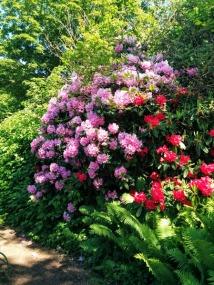 spring flowers in stanley park