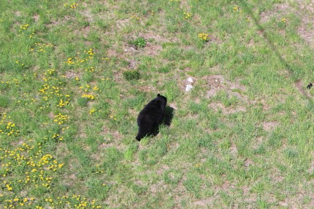 bear-001