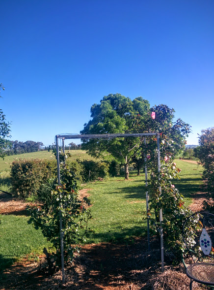 rose-arbour-overlooking-the-sheep-paddocks
