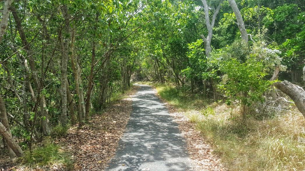 bush-path