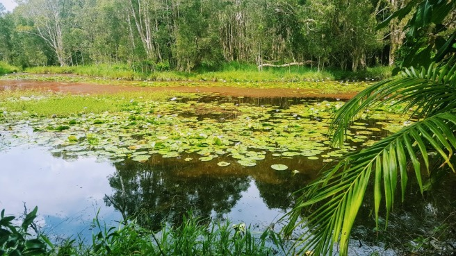 waterlillies-2