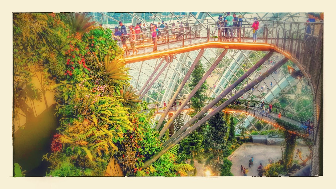 cloud forest effects