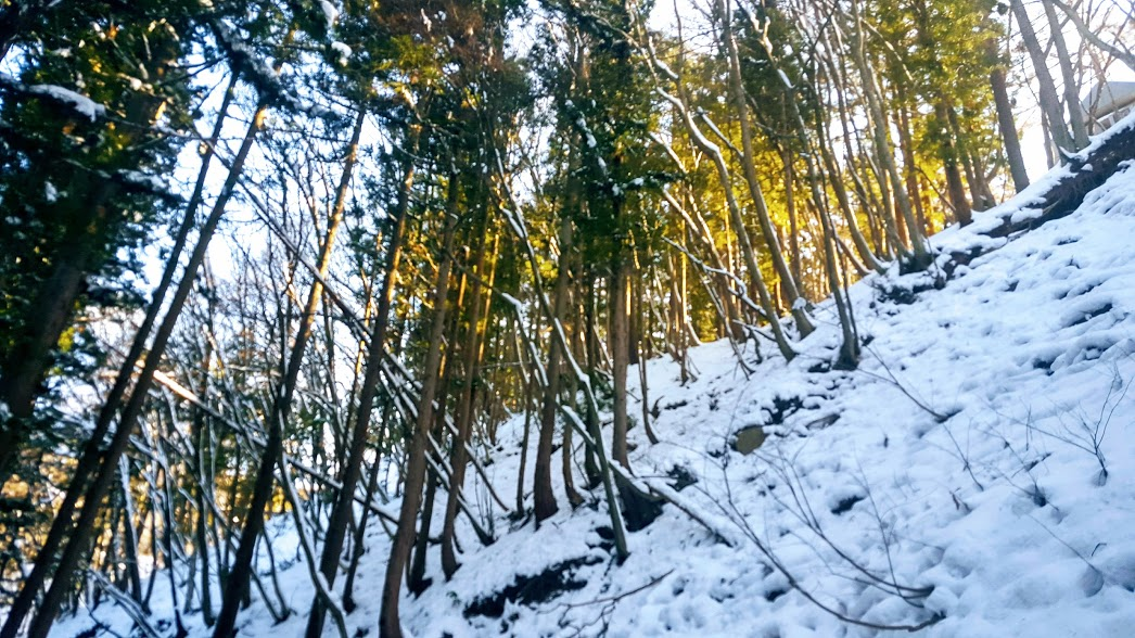 snow forest 2