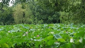honshu lake 8
